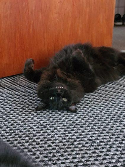 242 - Misty Buyers (Cat)