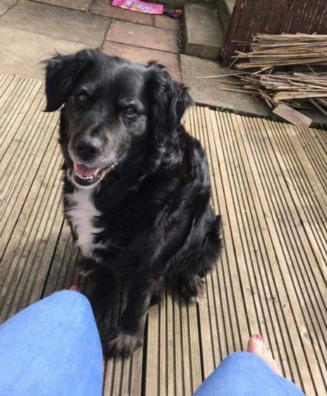 246 - Lady Hendry (Dog)