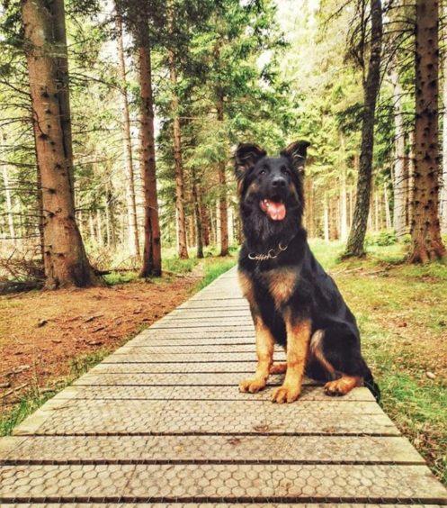 249 - Bear Ewen (Dog)