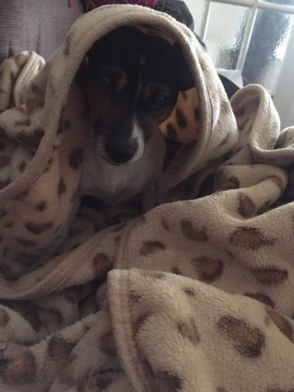257 - Roxie Fulton (Dog)