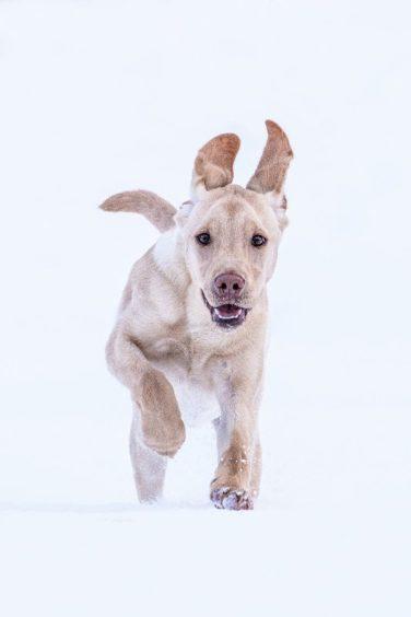 259 - Buddy Rennie (Dog)