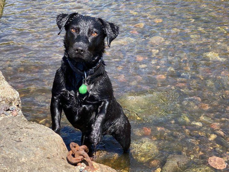 261 - Ollie Ritchie (Dog)