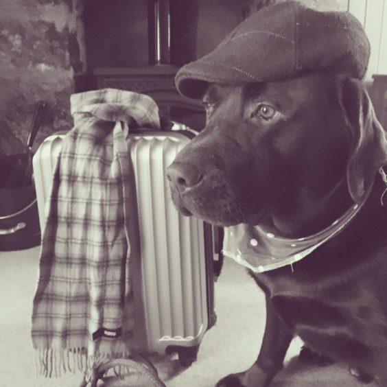 273 - Hamish Oliver (Dog)