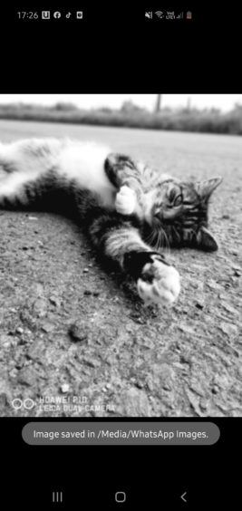 274 - Pixie (Cat)