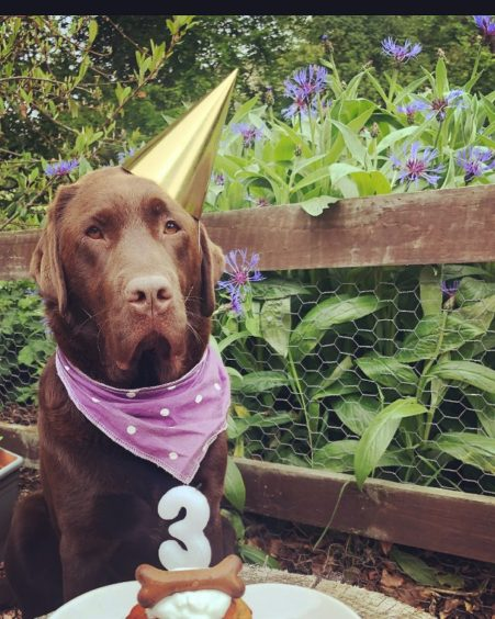 275 - Ollie Oliver (Dog)