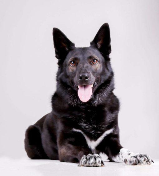 280 - Bonnie McIntosh (Dog)