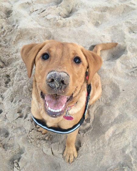 281 - Ruby Rennie (Dog)