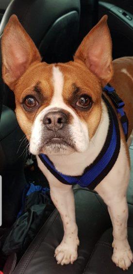 290 - Wilson Ritchie (Dog)