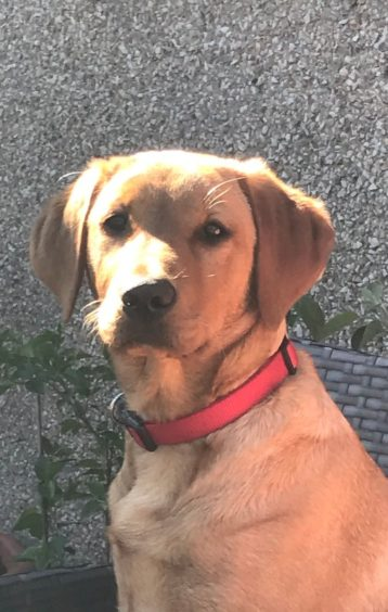 292 - Angus Shirreffs (Dog)