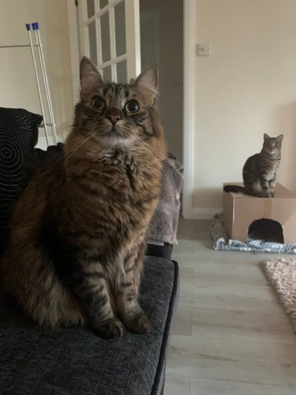 296 - Milo & Marley (Cat)