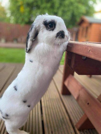 297 - Jackson Buchanan (Rabbit)