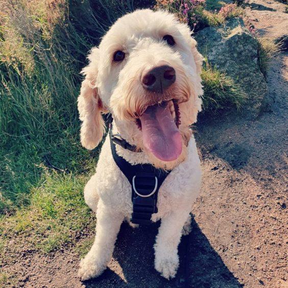 298 - Dougal Sheperd (Dog)