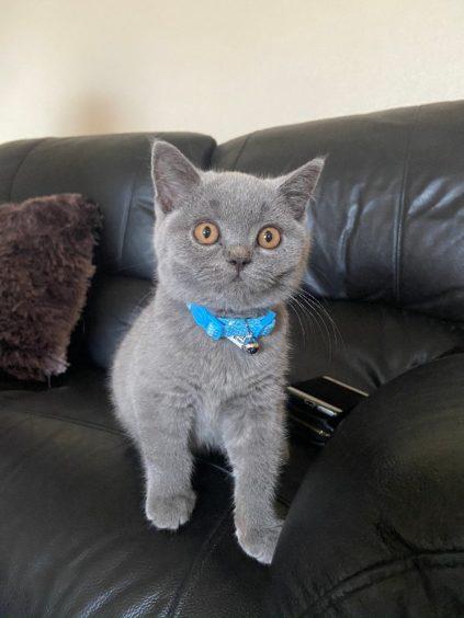 300 - Alfie-Bleu (Cat)