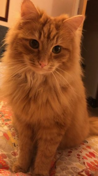 305 - Frank (Cat)