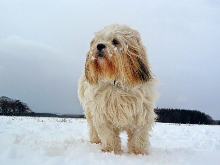 309 - Hamish Mcarthur (Dog)