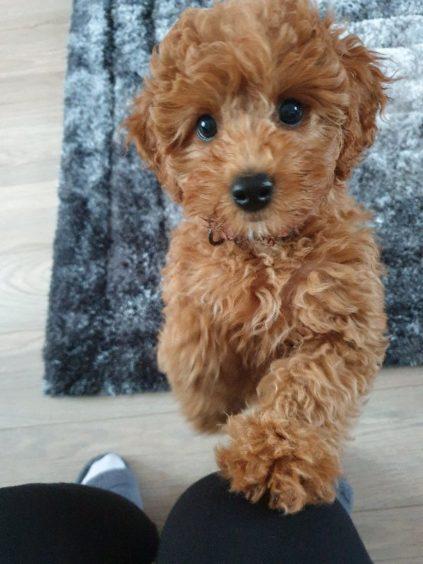 312 - Lulu Beaton (Dog)