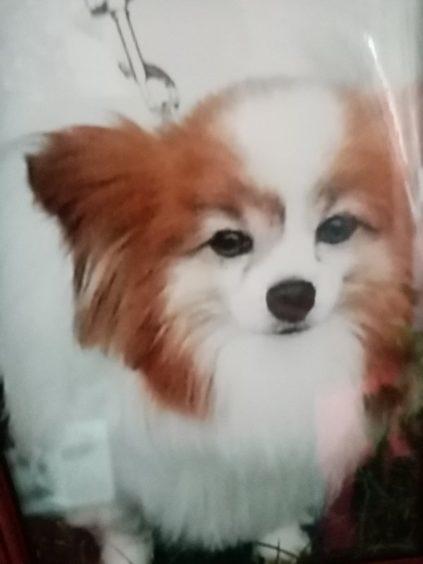 313 - Alfie (Dog)