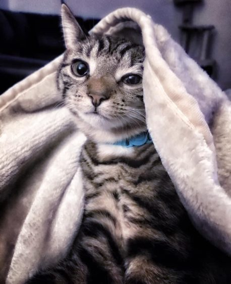 315 - Buddy Ross (Cat)