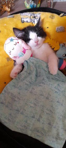 316 - Mia Rae (Cat)