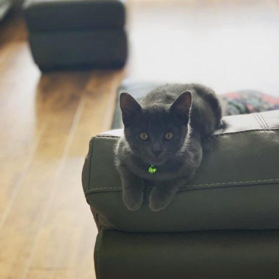 318 - Bob (Cat)