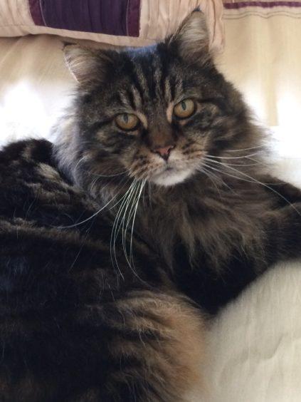 323 - Sparkie MacDoodle (Cat)