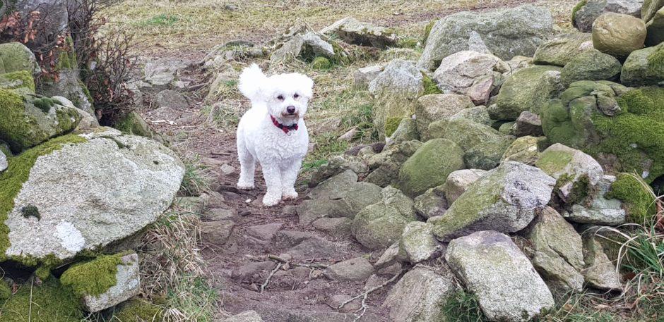 326 - Archie (Dog)