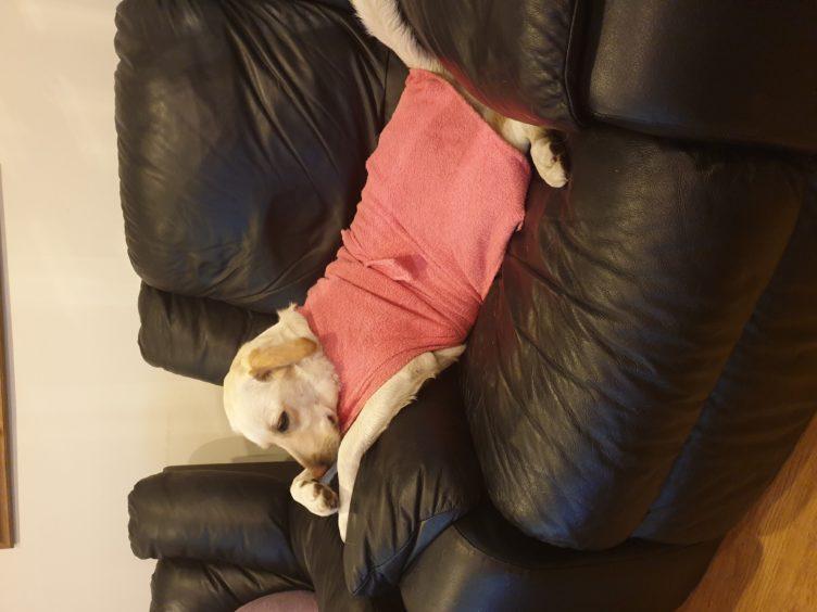 337 - Lana (Dog)