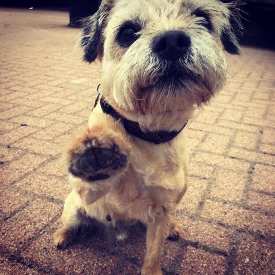 340 - Ollie (Dog)