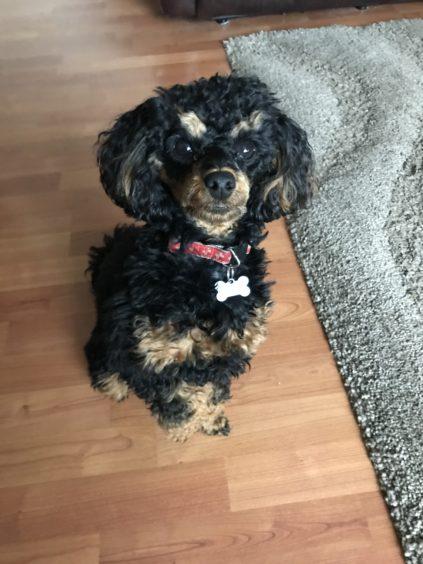 341 - Rocco (Dog)