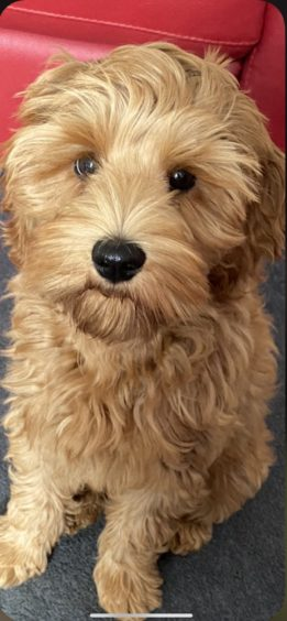 343 - Sydney (Dog)