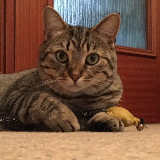 349 - Cleo (Cat)