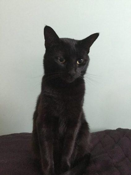 351 - Minnie (Cat)