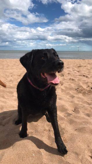 352 - Maisie (Dog)