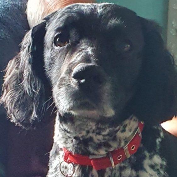 353 - Toby (Dog)