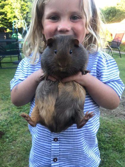 354 - Cookie (Guinea Pig)