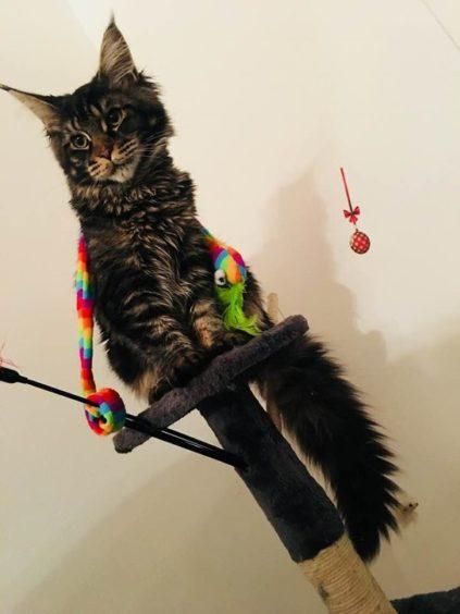 360 - Millie (Cat)