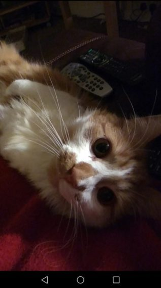 361 - Buddy (Cat)