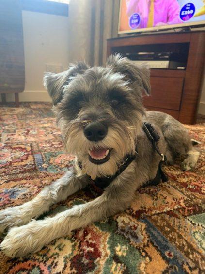 363 - Angus (Dog)