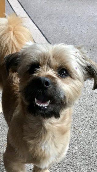 365 - Buddy (Dog)