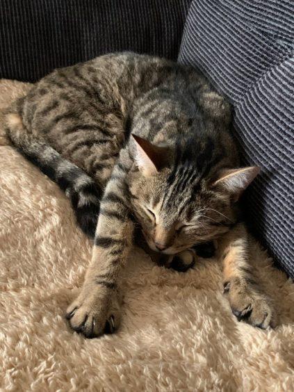 368 - Diego (Cat)