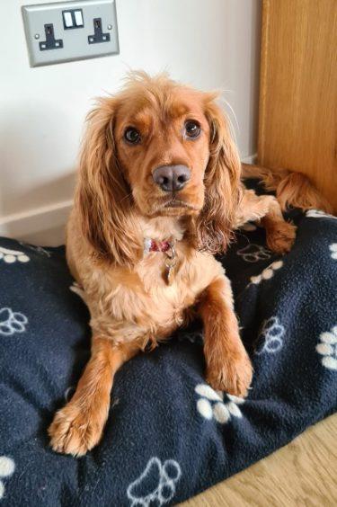 369 - Brody (Dog)