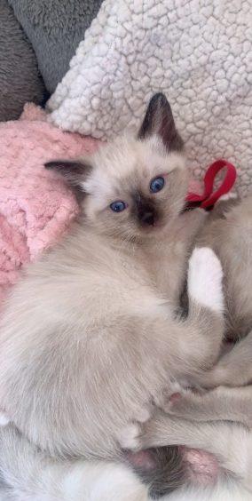 372 - Nala (Cat)