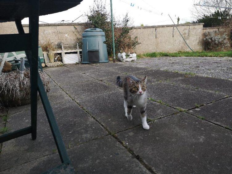 373 - Lexi (Cat)
