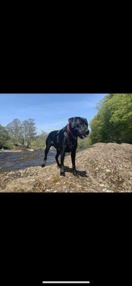 374 - Angus Donaldson (Dog)