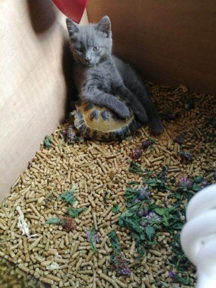 379 - Beryl (Cat)
