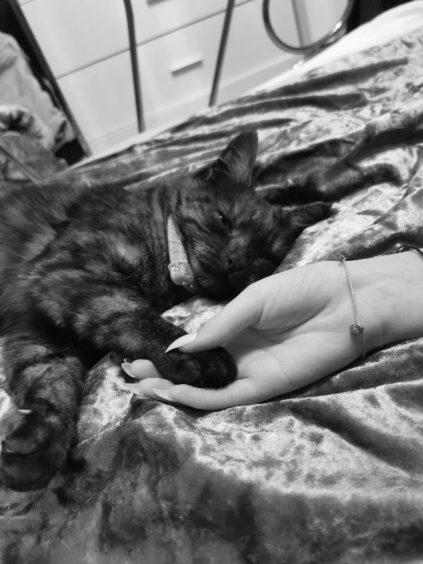 381 - Bluebell (Cat)