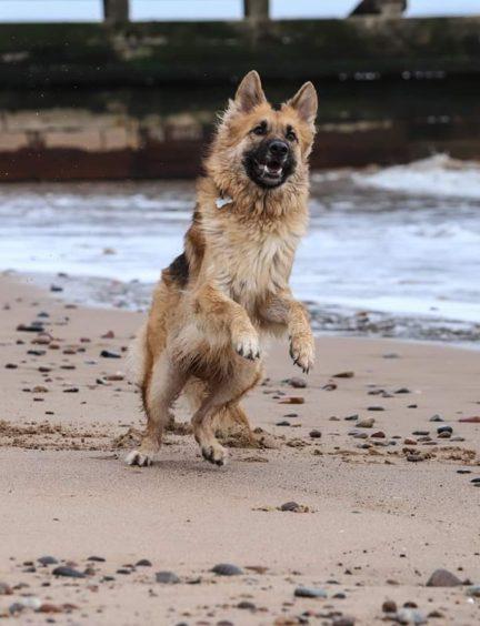 390 - Bella Milne (Dog)