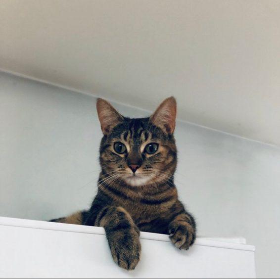 391 - Nala Stuart (Cat)