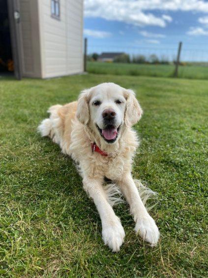 393 - Bobbi (Dog)