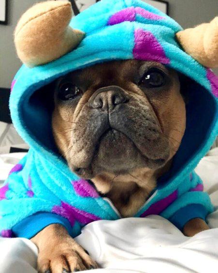 395 - Lola (Dog)